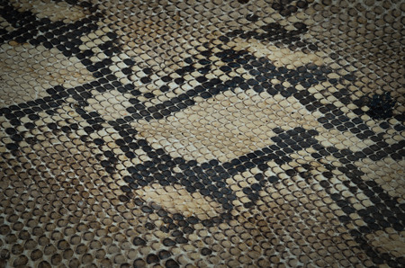 Snake skin leather texture photo