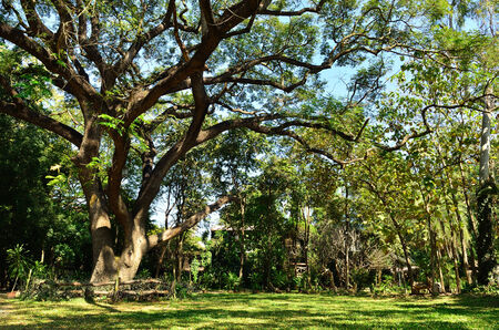 bush to grow up: A large tree in a tropical rain forrest