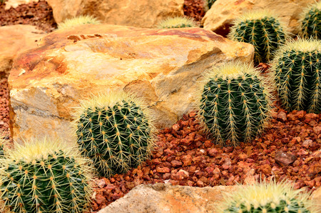 Cactus planted in the botanical garden