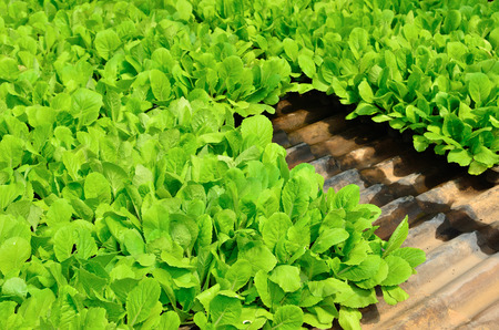 nurture: Green plant with small leaves, depending on soil fertilizer.