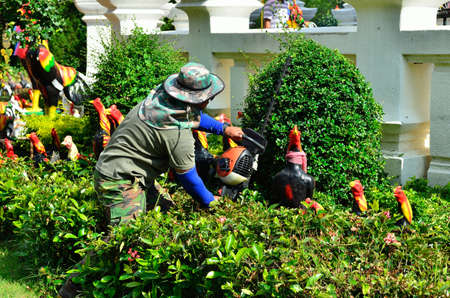 tree trimming: Close up gardener trimming hedge in the tree Stock Photo