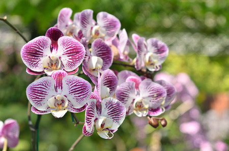 Orchidaceae is a diverse and widespread family of flowering plants, with blooms that are often colourful and often fragrant
