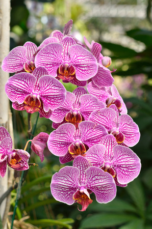diverse family: Orchidaceae is a diverse and widespread family of flowering plants