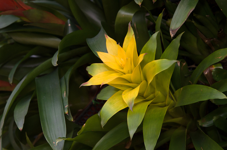 plants species: The Bromeliaceae are a family of monocot flowering plants of around 3,170 species