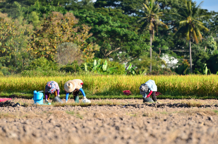 Farmers working in the fields and tilling the fertile soil during a summer sunny day