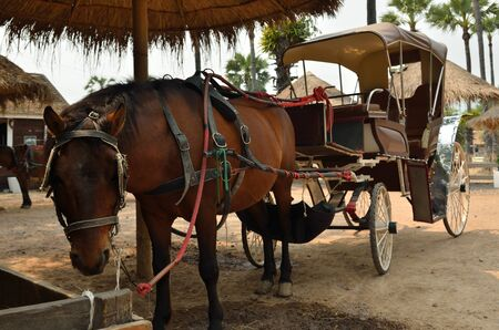 Tourist carriage of brown horse in a farm