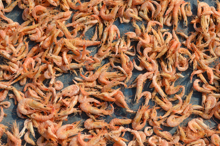 Dried shrimp, fisherman dry small shrimp for sell at fresh market in Thailand.