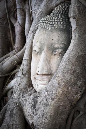 nakhon: Buddha head overgrown with tree roots in Ayutthaya, Thailand , Wat Mahathat
