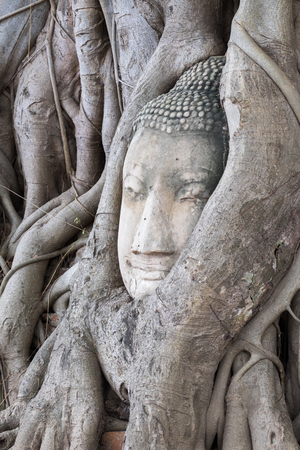 rood: Buddha head overgrown with tree roots in Ayutthaya, Thailand , Wat Mahathat