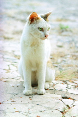 nurture: Cat