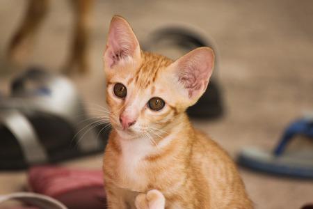 misbehave: Cat