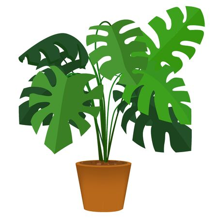 Vector illustration of Monstera tree in pot brown color.