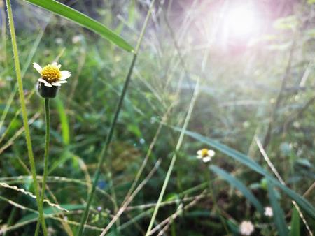 Grass and sunlight in morning Foto de archivo