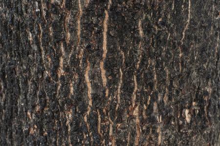 Surface old tree bark texture.