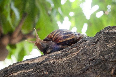 Snail on old tree branch