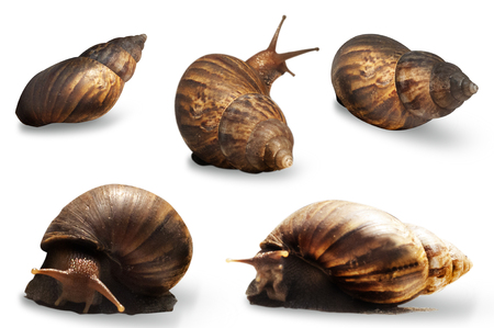 5 stance of snail on white background