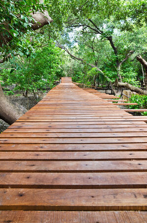 wooden path way among the mangrove forest in rayong, thailand photo