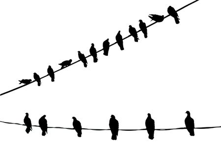 bird shadow: Black Birds on Electric cables