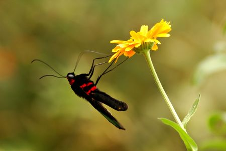 Butterfly and Yellow Flower photo