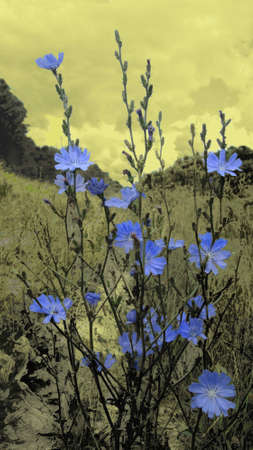 wallflower: Meadow at Fort Josefov 4