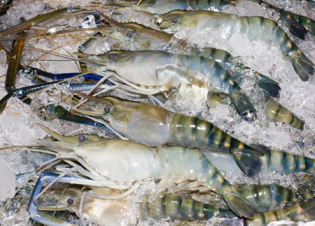 defrost: Shirmp or Prawn Lay on Ice.