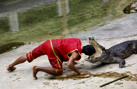The Crocodile Show in Animal Farm,The Man fight against Crocodile one by one. Stock Photo - 19133391