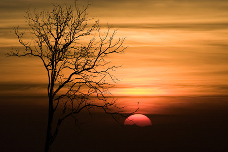Shape of Silhouette Tree No Detail Only Line and Structure on Orange Sky and Red Big Sun at sunset Tree leaf out have only branch and twig  photo