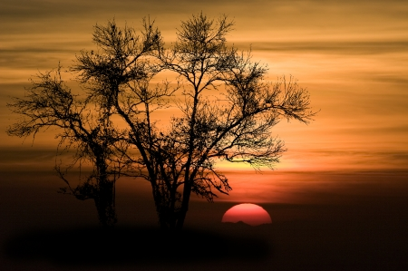 widely: Shape of Silhouette Tree No Detail Only Line and Structure on Orange Sky and Red Big Sun at sunset .Tree leaf out have only branch and twig.