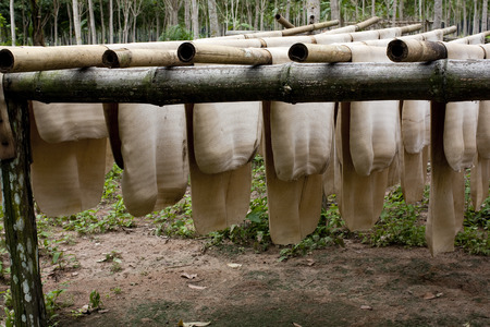 Rubber Sheet from Latex on bamboo clothesline. photo