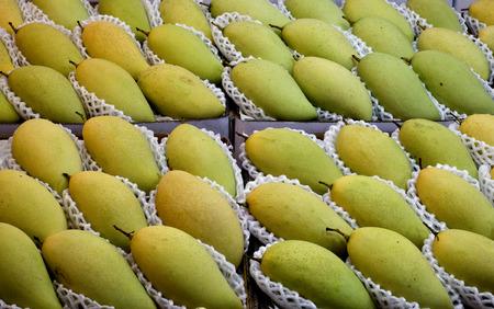 underlay: Maduran los mangos yac�a como patr�n. subyacer con espuma suave. Foto de archivo