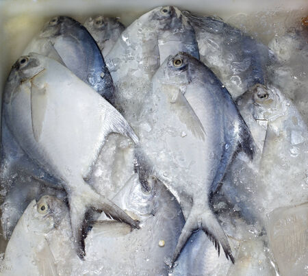 Fresh Butterfish in ice at fish market Fishery seafood from Gulf of Thailand Top view shot  Standard-Bild
