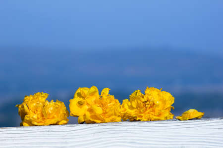 cotton flower: Yellow silk cotton flower lay on white fence.Background is blue sky and blurred mountain. Stock Photo