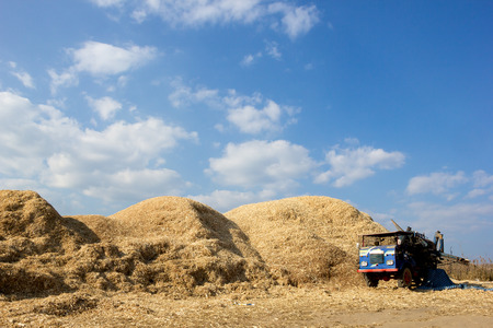 grind: Pile of corn straw after grind peel.Look like large mountain. Stock Photo