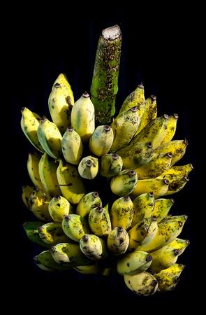 ripen: Closeup pile bunch of  ripen cultivated bananas.