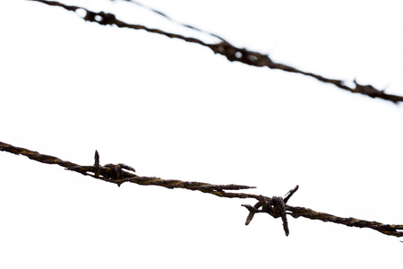 meshed: Rust Barbed Wire on white background. in focus only front barbed wire.Back barbed wire out of focus.
