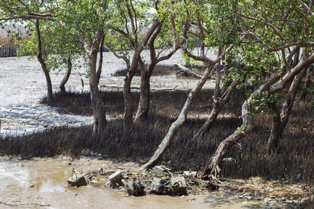 the flood tide: Mangrove and bamboo protect scour from sea tide at seashore. Stock Photo