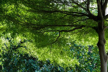 towering: Ramas coloso en forma de grandes ojos tree.Worm ramas vista shot.Lofty nobles y hoja verde con iluminaci�n trasera.