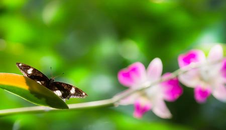 bunchy: Asimiento de la mariposa en el ramo de orqu�deas de color rosa en el parque.