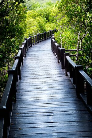 boardwalk trail: Wood bridge, Boardwalk for nature trail in mangrove forest.