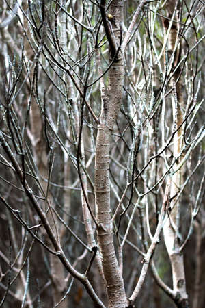 the flood tide: Mangrove forest at low�tide time. close up branch.