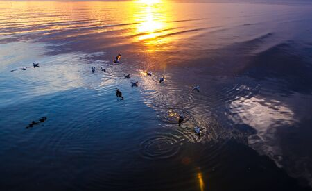 winter escape: The thousands of seagulls that winter escape from Fridge zone and Temperate zone while swim in the sea of Tropic zone. Stock Photo