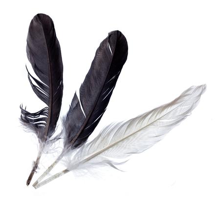 Deux plumes noires et une plume float blanc sur blanc isolé fond. Banque d'images
