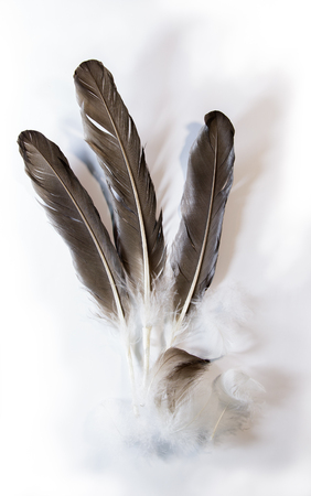 afloat: Feathers float softly with a few shadow on white background. Stock Photo