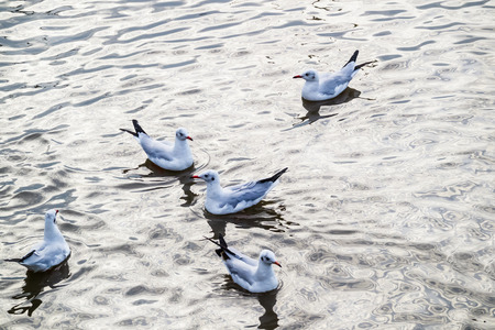 shimmery: Flock Seagulls float on glittering reflection ripple in sea while sunset.