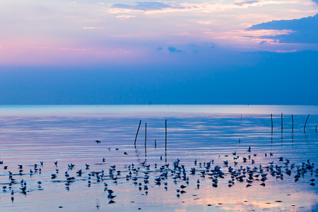 The thousands of seagulls that winter escape from Siberia to Tropic zone, swim in the sea at sunset. Stock Photo