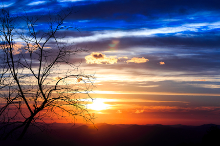 Sun just shine at sunrise scene, Silhouette of leaf out tree on colorful sky. Stock Photo