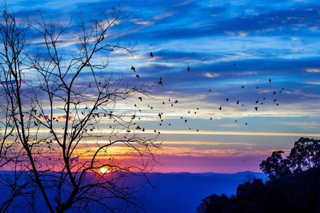 Leaf out tree and flock of birds on colorful sky at sunrise. Stock Photo