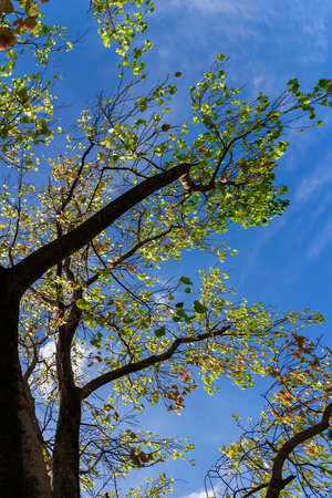 Distortion part of bright tree with worm eye view shot, in the beautiful day of joyful sky and bright cloud. Stock Photo