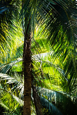 Close up the leaf of coconut plantation in the shadow. Imagens