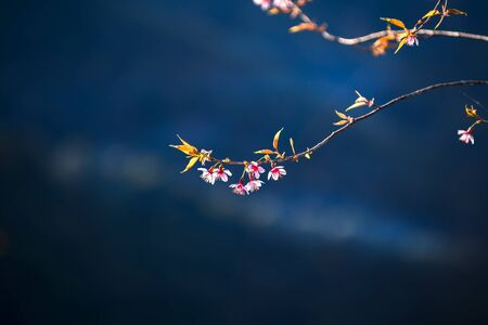 The silent blue sky scenery with the pink flower on the foreground in the winter. Standard-Bild